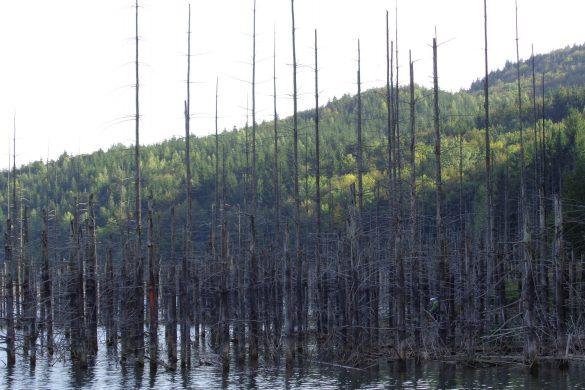 Kamperen bij de verdronken bomen