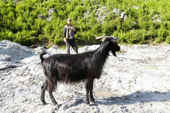 Ode aan de herders