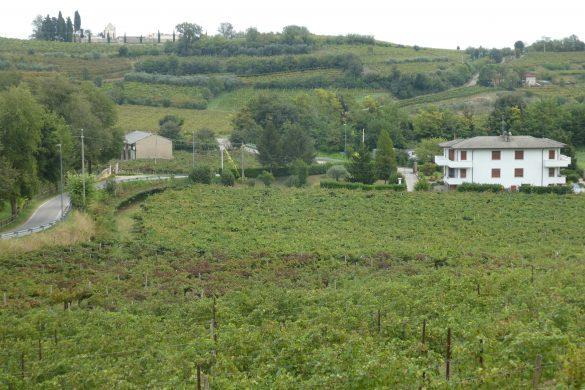 kamperen met uitzicht op wijnvelden