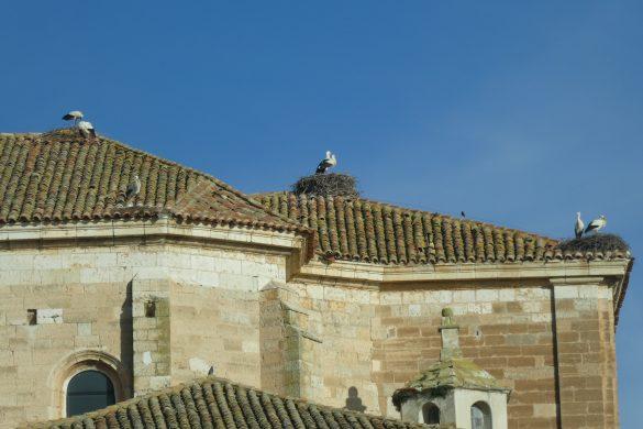 ooievaars op het dak in het Spaanse Torquemada